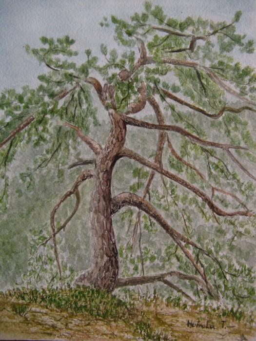 Akvarel Plener Malba Kresba Rezba Homola Tomas Houmy